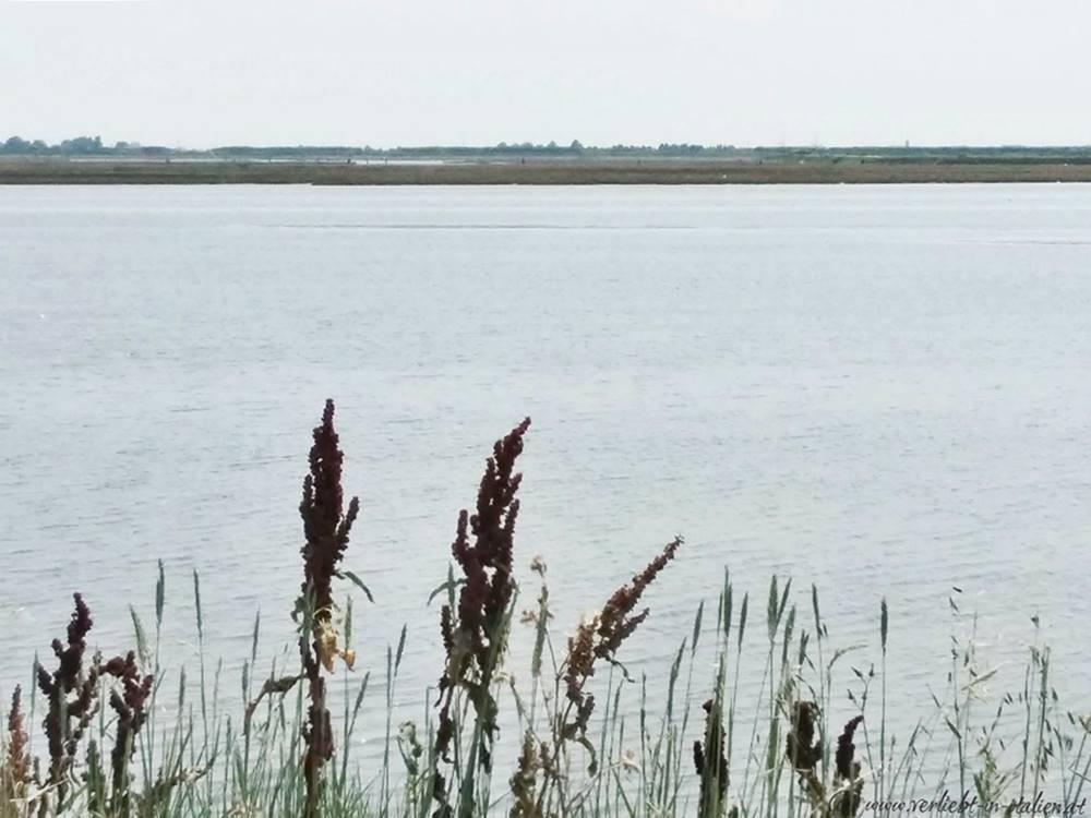 Chioggia Mare