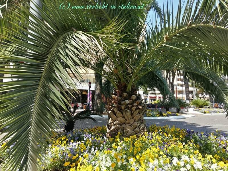 Palmen auf der Piazza
