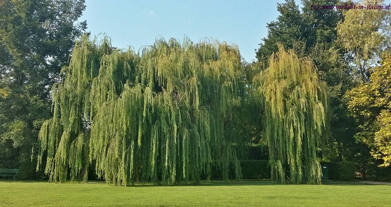 Trauer-Baum
