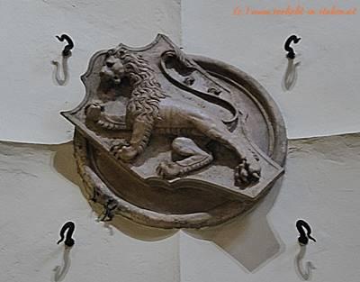 die Löwin ist ein Löwe
